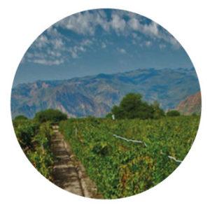 Tucumán – Turismo Rural Amaicha del Valle II